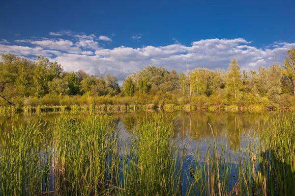 Fotoobraz – Wiosenne Bobrowisko w Starym Sączu #17539